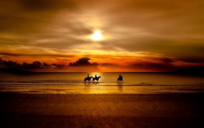 horses and sunset